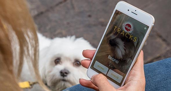 Dog looking up at smartphone