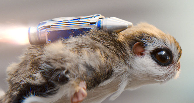 Flying squirrel with jetpack