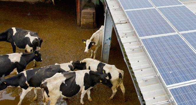 Cowshed with solar panels on roof