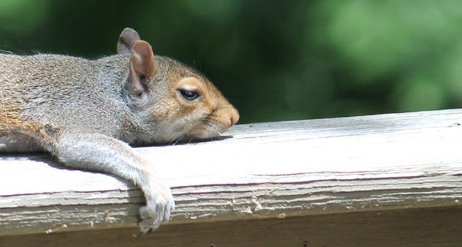 Image result for tired squirrel