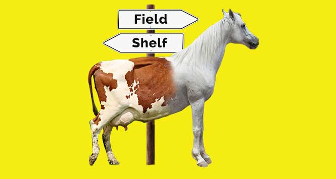 Half-horse, half-cow