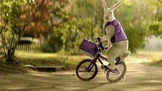 Cadbury Easter bunny
