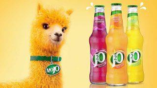 Mojo, J20's alpaca turned brand ambassador