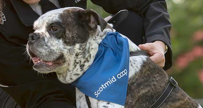 Scottish SPCA officer holding dog