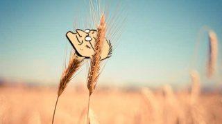 designer wheat