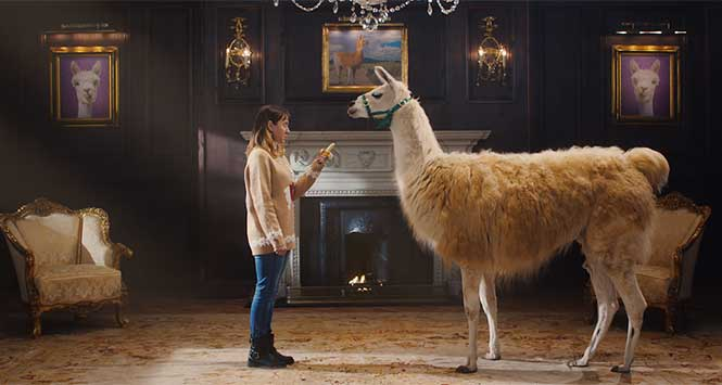 Woman staring out a llama